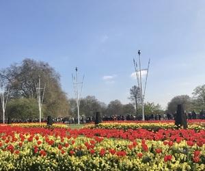 Buckingham palace, england, and english image
