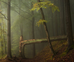 autumn, Darkness, and forest image
