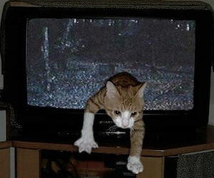 cat, grunge, and tv image