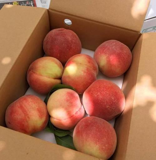 fruit, strawberry, and camera image