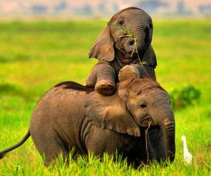 animal, adorable, and baby image