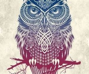 beauty, owl, and cool image