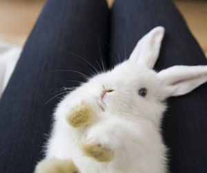 bunny, hase, and rabbit image