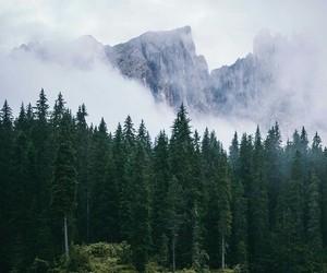 woods image