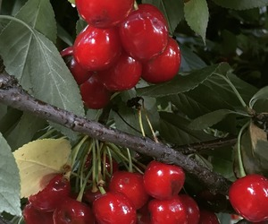cherry, red, and green image