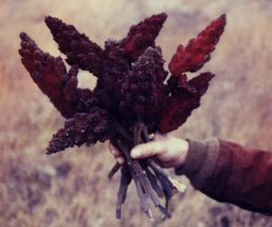 mike brodie and staghorn sumac image