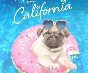 donuts, lindos, and pug image
