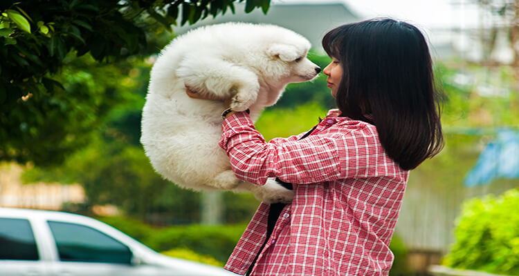 article and samoyed dog image