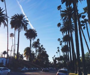 palmtrees and usa image