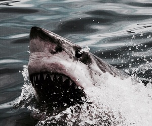 theme, shark, and rp image
