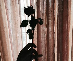 rose, shadow, and alternative image