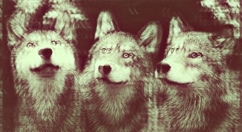 Cute Hipster Indie Wolves Inspiring Picture On Favimcom