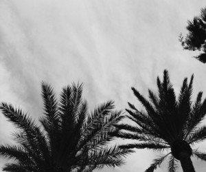 black&white, palm, and palm trees image