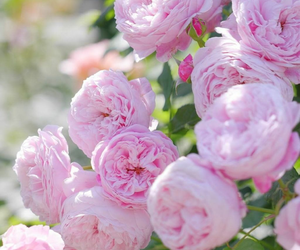 94 Images About Fleurs On We Heart It See More About Flowers Pink