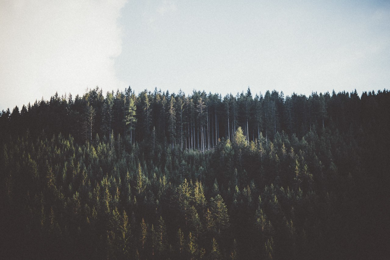 forest and landscape image