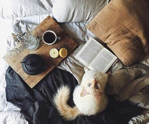 bed, photo, and book image