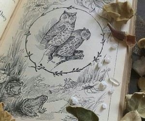 book, frog, and owl image