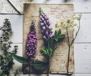 book, botany, and flowers image