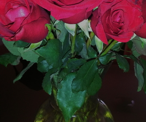 flower, red, and rosas image