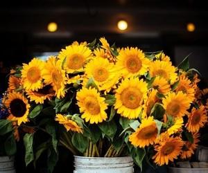 fresh, sunflowers, and nature image