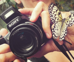 butterfly, appareil photo, and picture image