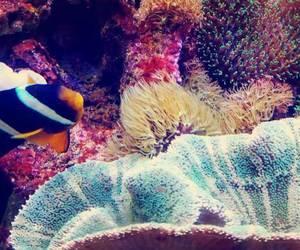 aquarium, colors, and water image