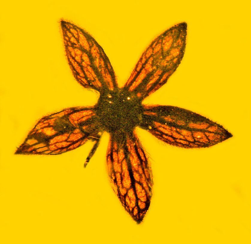 amber, article, and flowers image