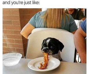 dog, food, and funny image