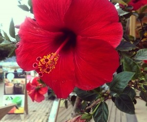 beach, red, and flower image