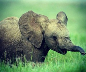 animals, elephant, and baby animals image