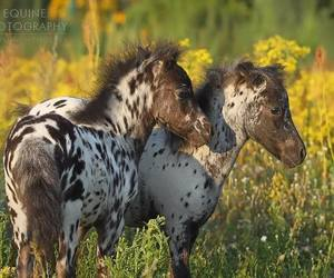 animals, filly, and horses image