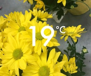 19, degrees, and flowers image