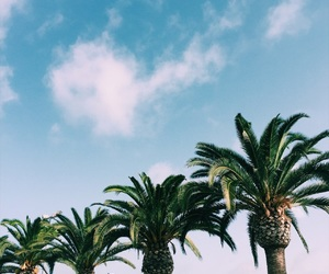 palm trees, summer, and tumblr image