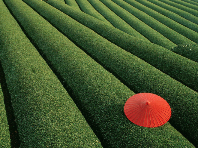 green, japan, and tea image
