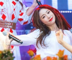 fox, seo, and lovelyž image