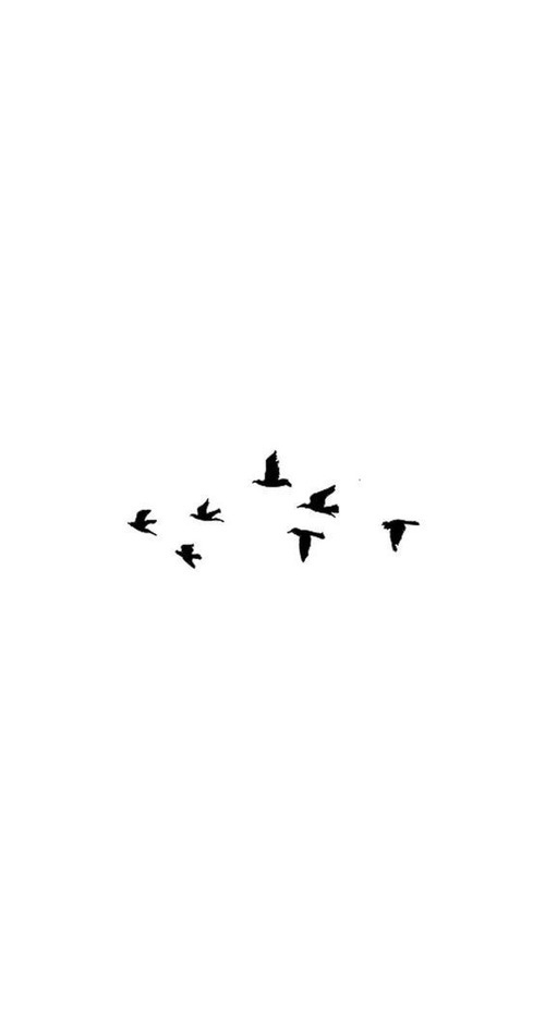 wallpaper, bird, and background image