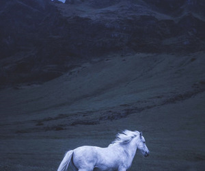 wallpaper, unicorn, and horse image