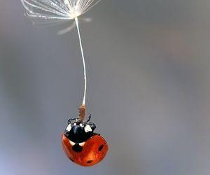 ladybug, macro, and photography image