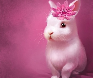 rabbit and pink image