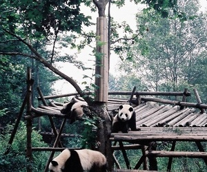 forest, green, and panda image