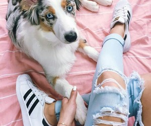 dog, adidas, and indie image