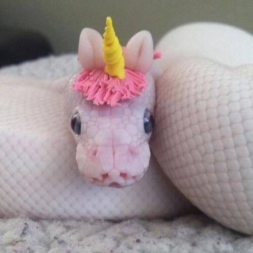 snake, unicorn, and animal image