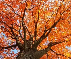 autumn, orange, and tree image