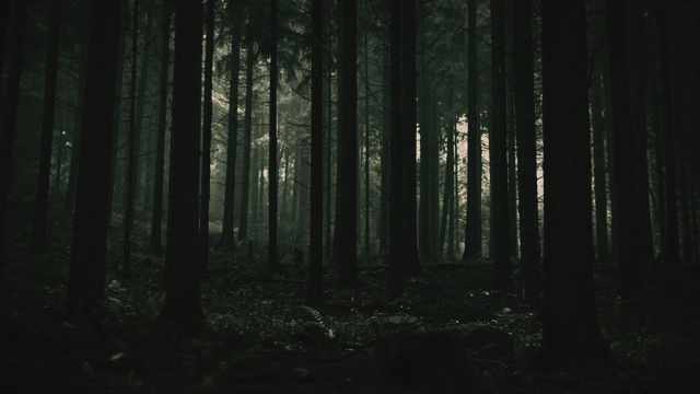 forest and dark image