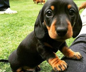 puppies and puppy image