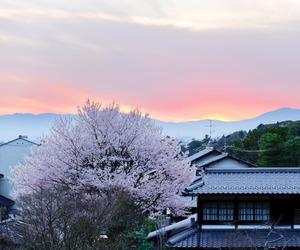 japan, sakura, and japanese image