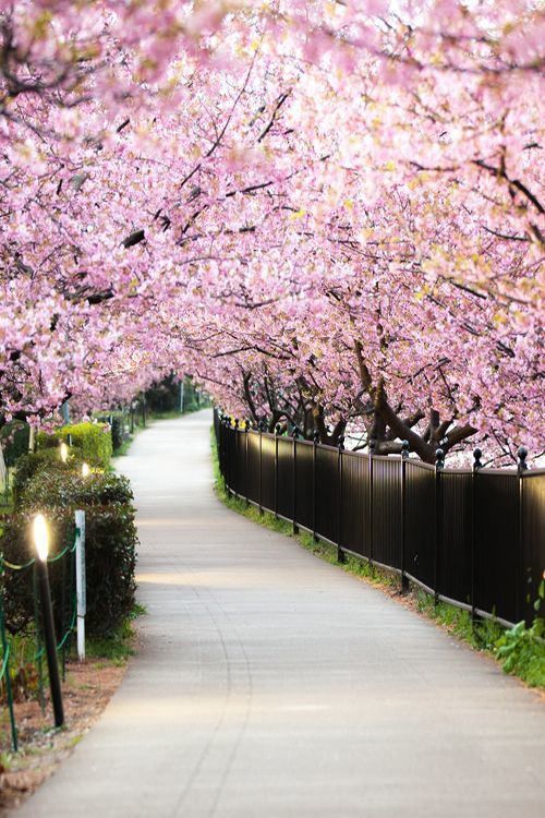 pink, trees, and flowers image