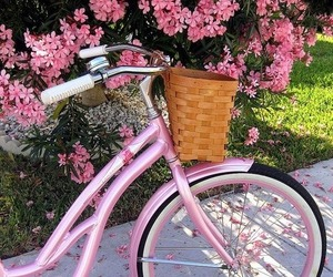 pink, flowers, and bicycle image