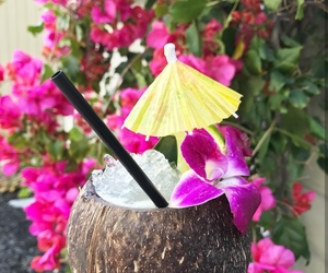 beautiful, coconut, and drinks image
