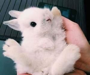 cute, animal, and rabbit image